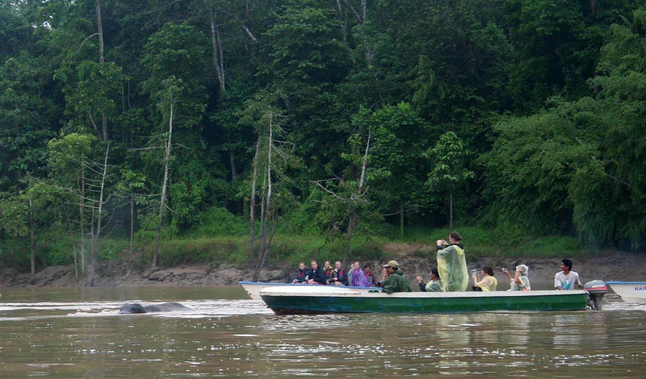 Met de boot over de Kinabatangan