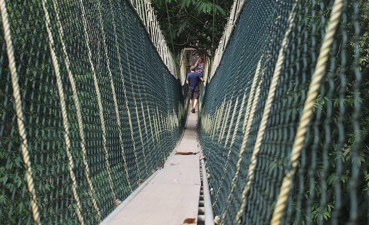 Canopy Walk bij Taman Negara