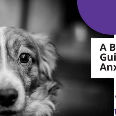 dog-looking-anxious
