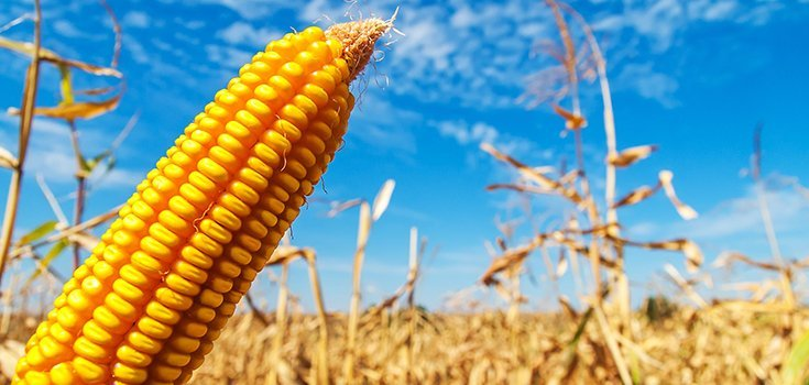Boulder County in Colorado to Phase Out GMO Crops