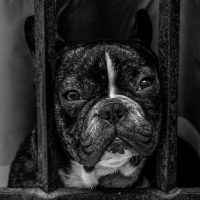 Daily care checklist for your bulldog