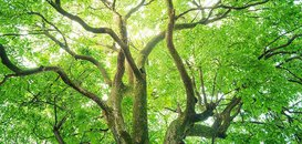 Nature Slashes the Risk of Diabetes, Heart Disease, and More