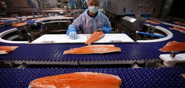 Canada Launches New Risk Assessment for GMO Salmon