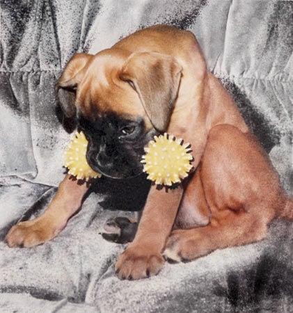 Restoring pet photographs final restoration