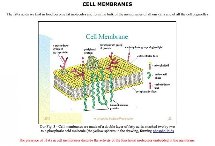 cell membranes soy article 2