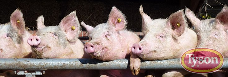 Major Meat Company Goes Antibiotic-Free After Charged with 33 Counts of Animal Cruelty