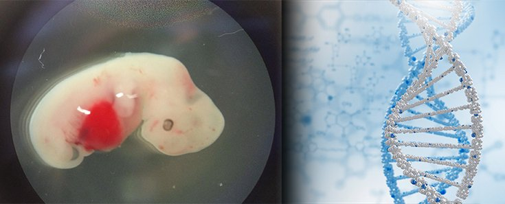 Scientists Create Human-Pig Embryo for Transplant Research