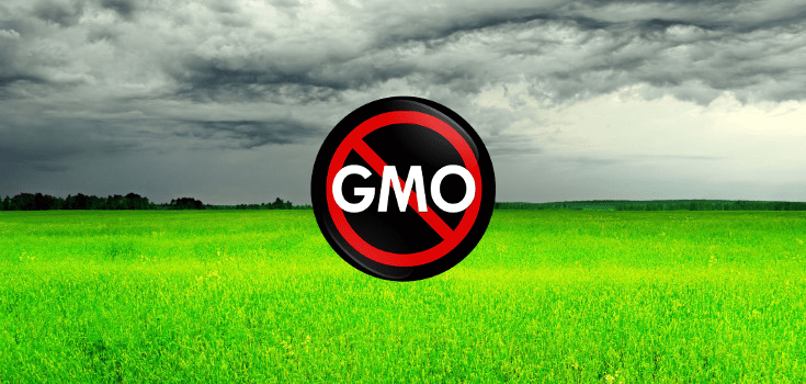 New GMO-Approved Grass may Infiltrate a Lawn Near You