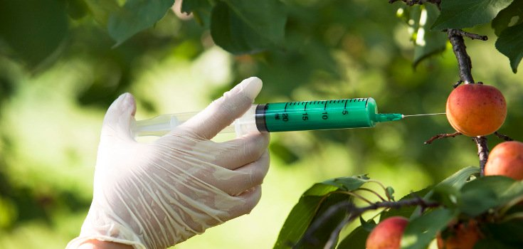 4 Major GMO Threats that Endanger Our World Every Day