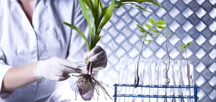 WHO About to Deliver Huge Blow to Companies Like Monsanto