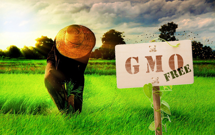 8 Proofs We Don't Need GMOs to Feed the World