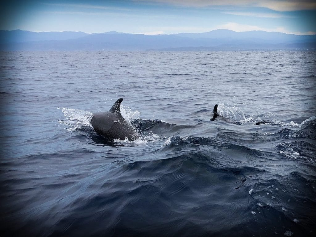 Dolphins at a local tour in Mexico, one of the sustainable tourism examples