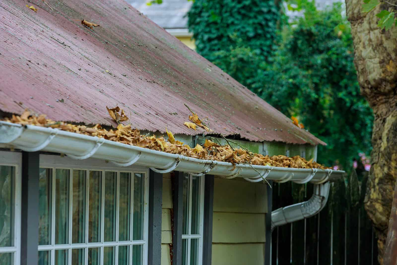 roof with clogged gutter