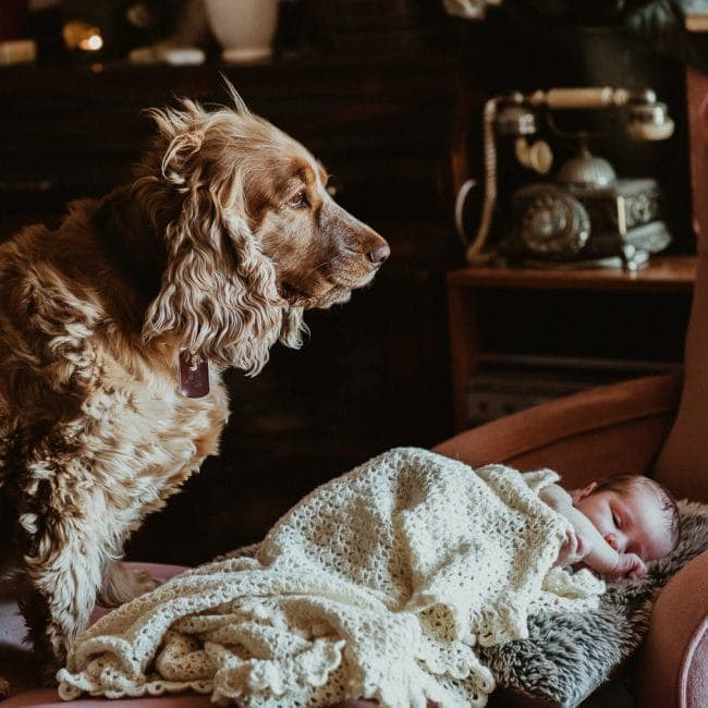 dog guarding baby - pet and baby photography in melbourne in your own home