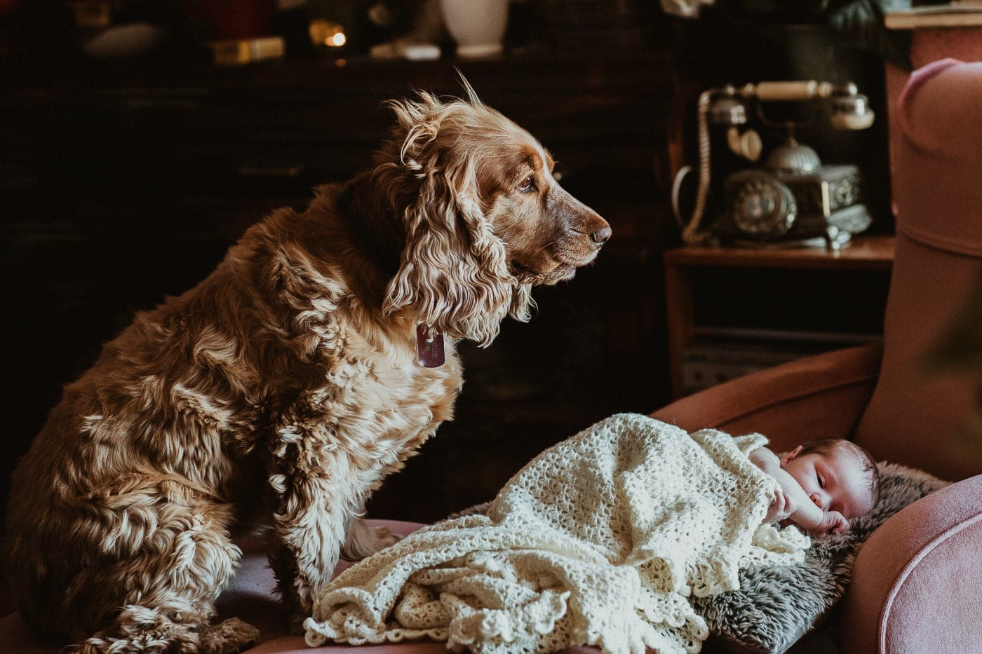Newborn and Pet Photography in melbourne - Dog watching baby sleeping
