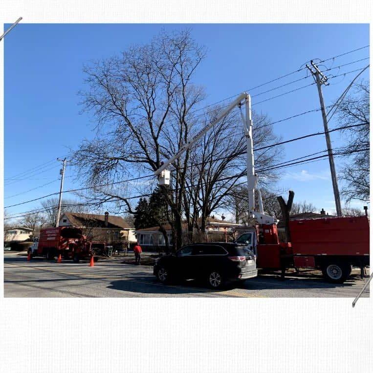Skokie Tree Service Removal