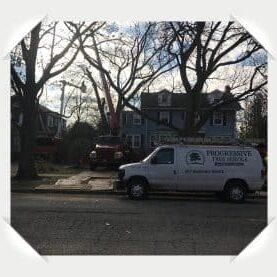 wimette tree removal