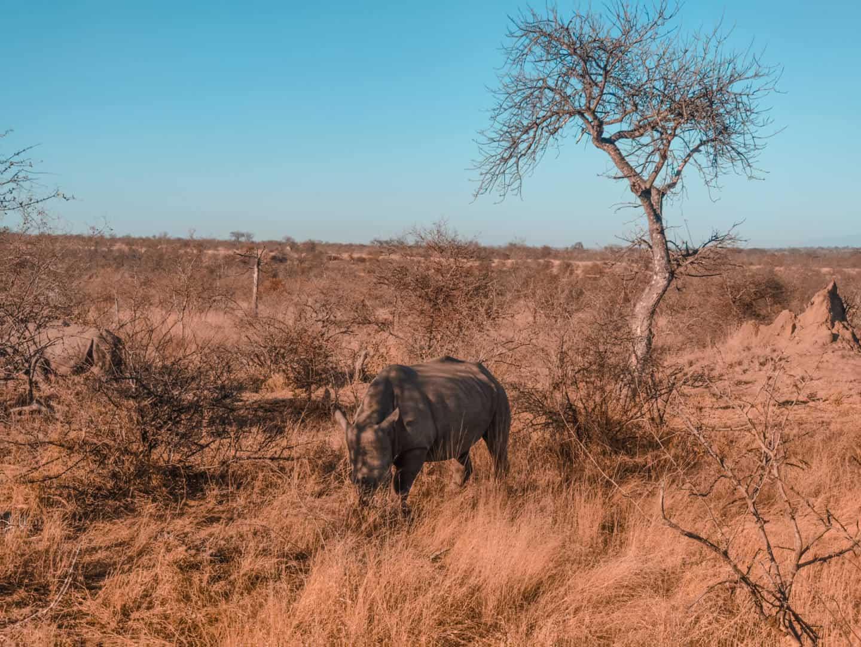 Quando ir ao Kruger Park - melhor época