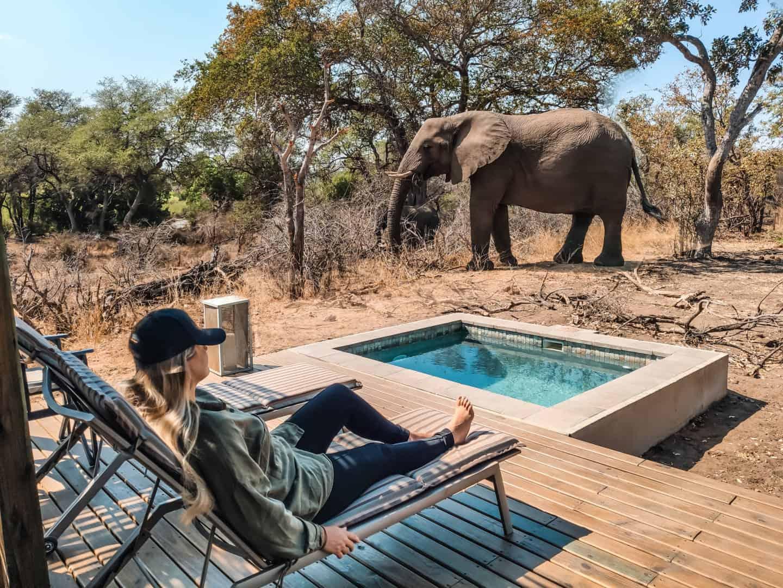 Guia completo sobre o Kruger Park na África do Sul - dicas, preços