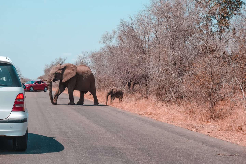 Dicas de safári no Parque Nacional Pialanesberg África do Sul