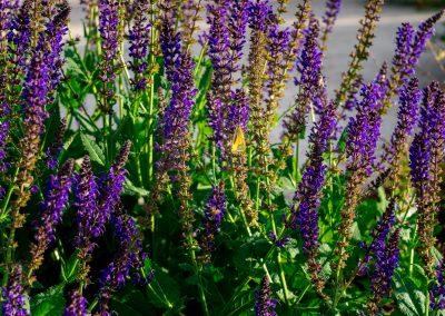 Flowers in Esperanza Ranch