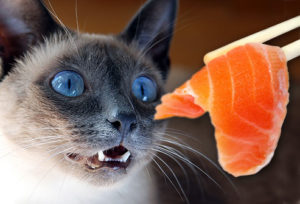 Can-Cats-Eat-Salmon