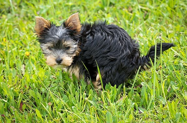 so why does my puppy poop so much?