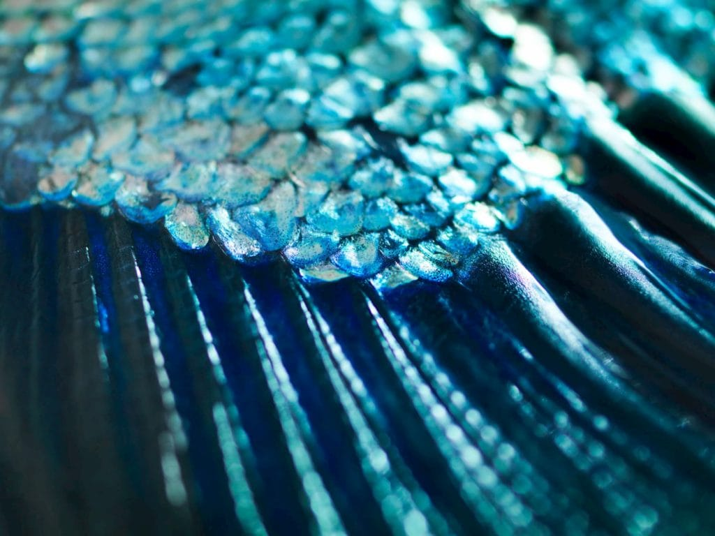 Close-up of fish scales