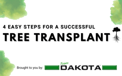 Tips for a Successful Tree Transplant