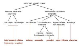 Hypnoscient - Amygdale et mémoire