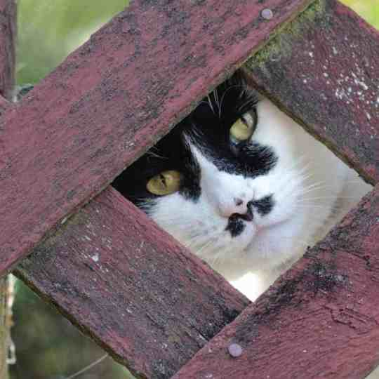 You can inject humour into a photograph by looking for a cat's expression