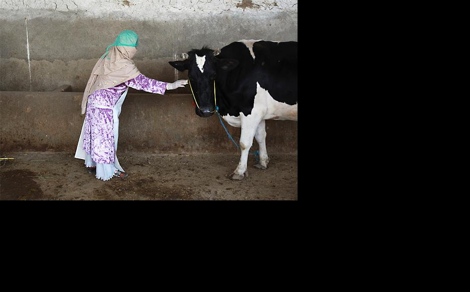 Afghan women are getting involved in dairy farming. (Photo: John Moore/Getty Images)
