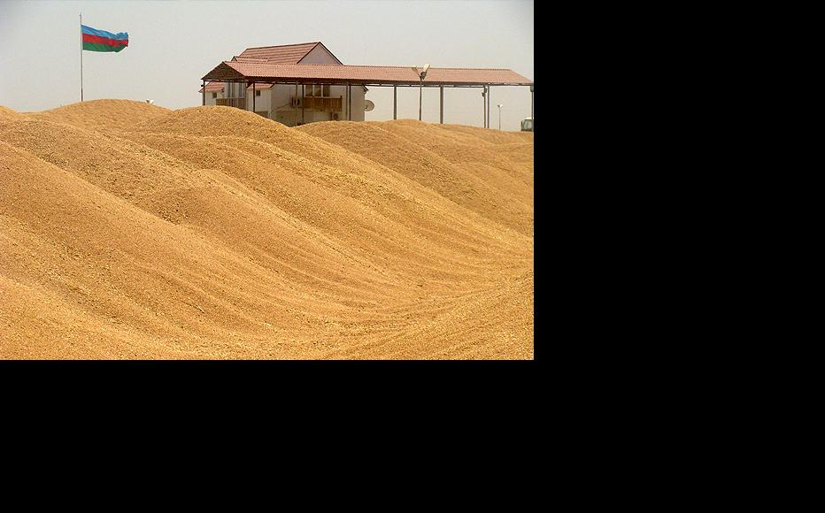 Azerbaijan's grain harvest this year was far lower than expected, partly due to bad weather but also because of chronic underpending. (Photo: Sabuhi Mammadli)