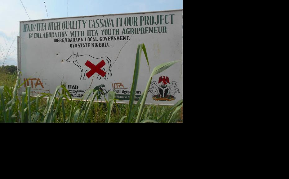 A signpost at a cassava field in Ibarapa. (Photo: Hannah Ojo)