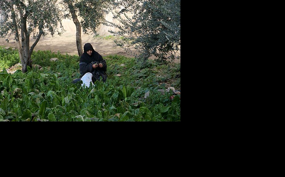 A woman farms a small plot in Aleppo's al-Fardous neighbourhood. (Photo: Baraa Al Halabi)