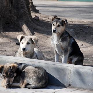 Stray dogs present a public health hazard. (Photo: Andrey/Flickr)