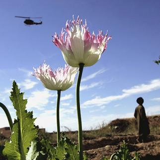 Poppy field in Afghanistan's Helmand province. (Photo: John Moore/Getty Images)