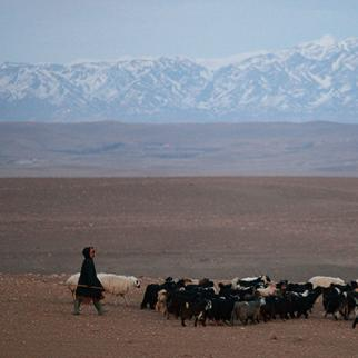 Farmland in Zabul province is drying up as water resources are drained by privately-dug wells. (Photo: Scott Olson/Getty Images)