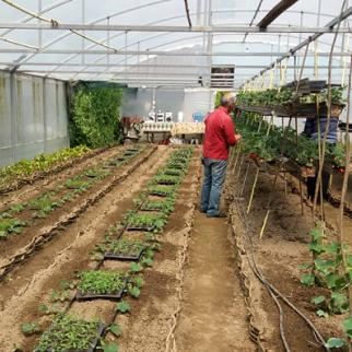 A farmer tending to his strawberry greenhouse, that's near the occupation line. (Photo: Tamuna Shonia)
