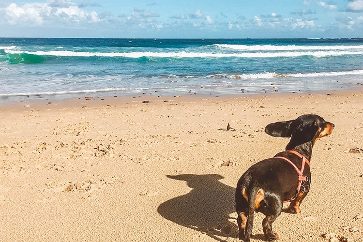 7 Tips For Importing Your Dog To Australia