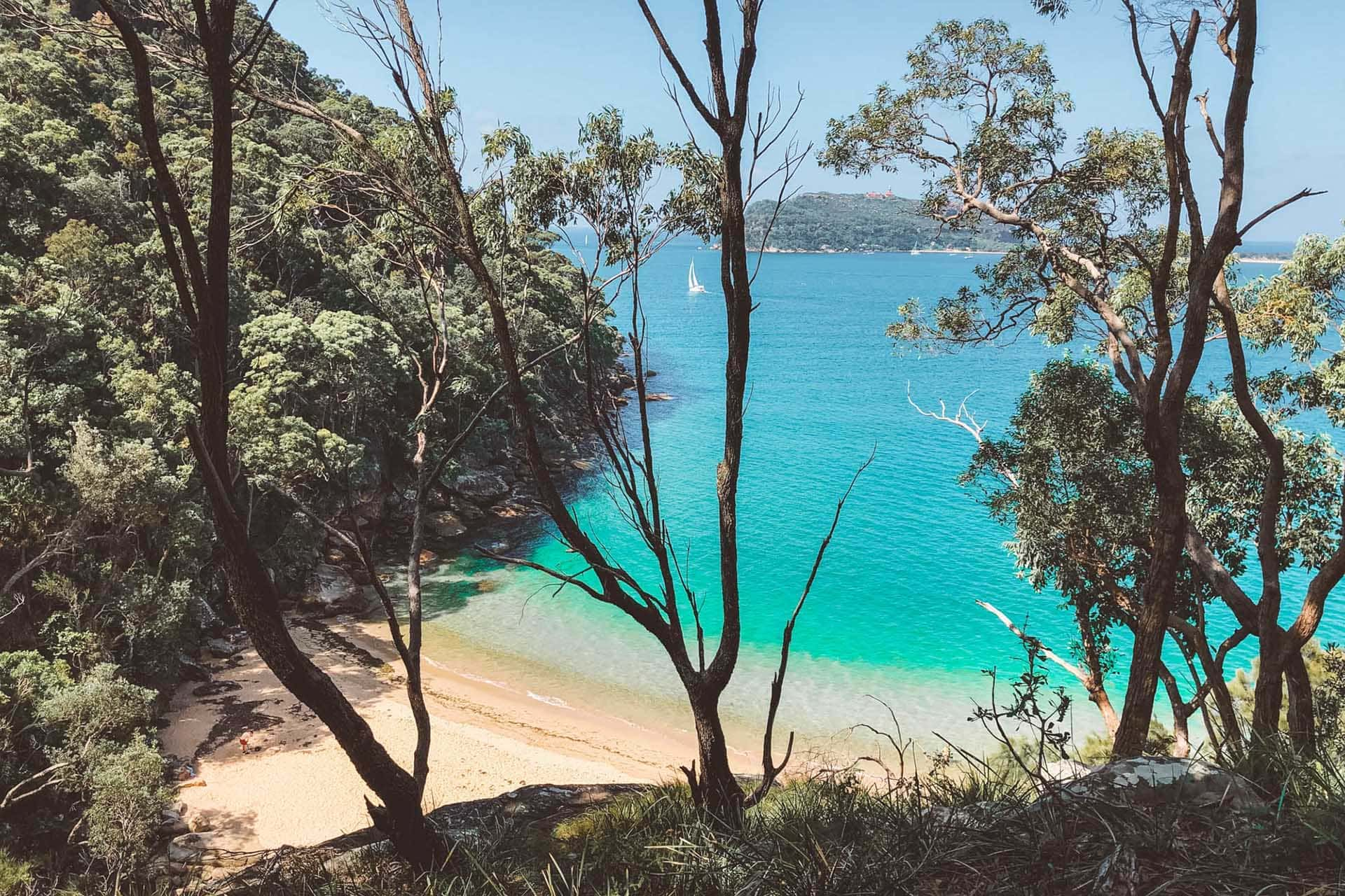 15 Best Sydney Northern Beaches Walks