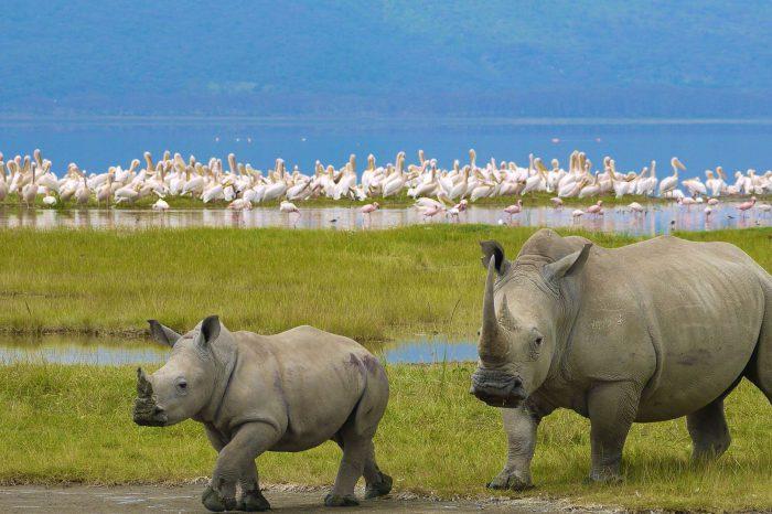 Réserve nationale de Samburu