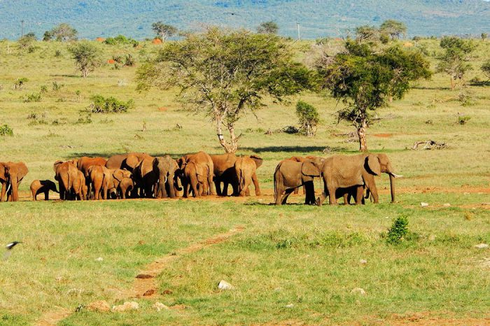 Parc national de Tsavo Ouest