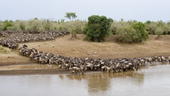 5 days Amboseli / Lake Naivasha / Masai Mara (4 nights) – Flight Ukunda