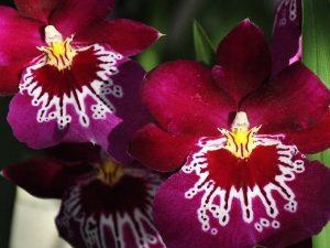 reinhart orchideeen haren Martini Hotel Groningen
