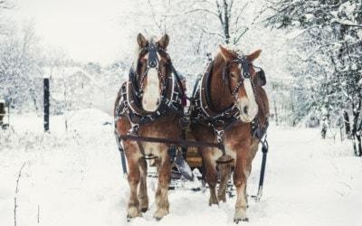 The Best Winter Sleigh Rides in Northern Michigan