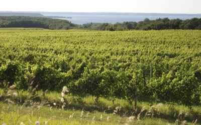 Sip & Tour Wine Country: Leelanau Peninsula Wine Tour by Bike