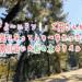 関西テレビ「よ~いドン!」で円さんが気になってしゃ~なかった夙川沿いの松の木に貼られたラベル