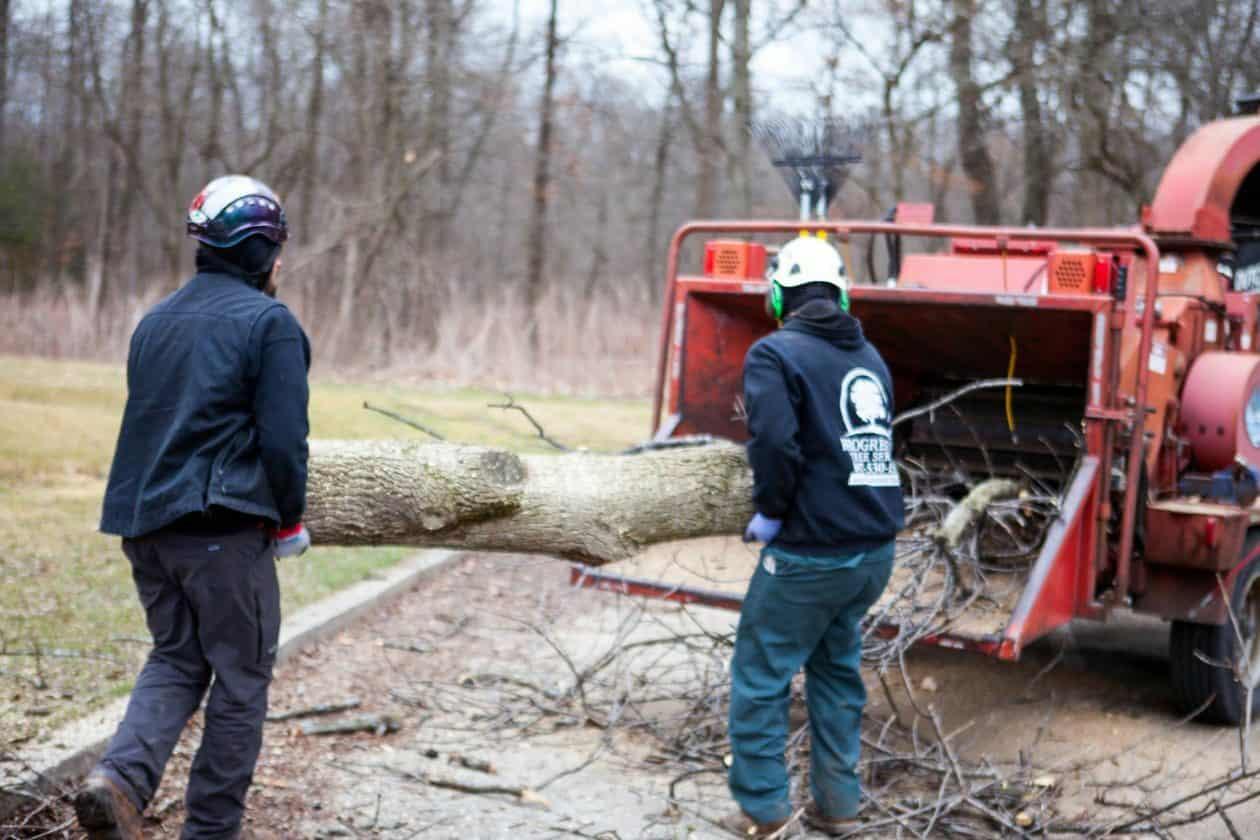 tree mulching by tree experts