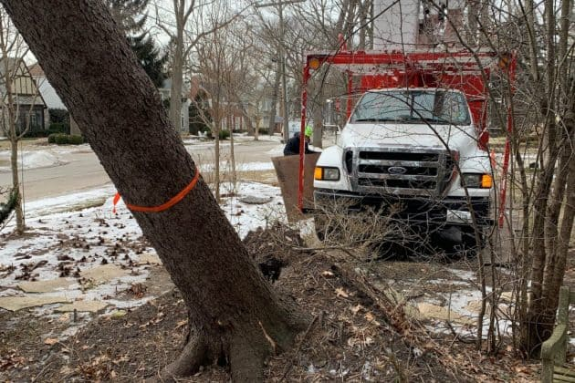 safe uprooted tree removal